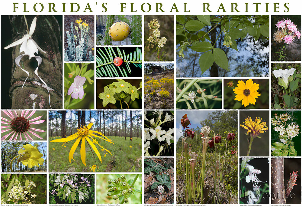 Florida's Floral Rarities