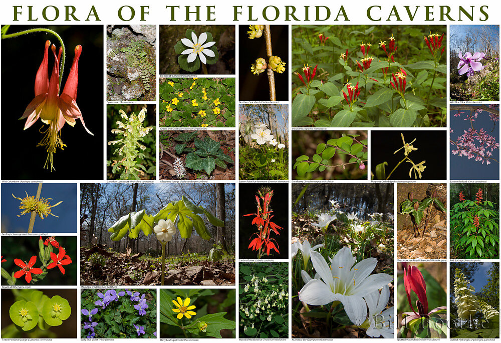 Flora of the Florida Caverns