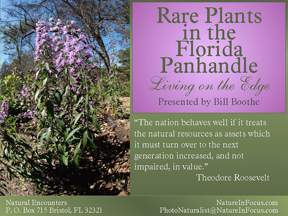 Rare Plants in the Florida Panhandle: Living on the Edge