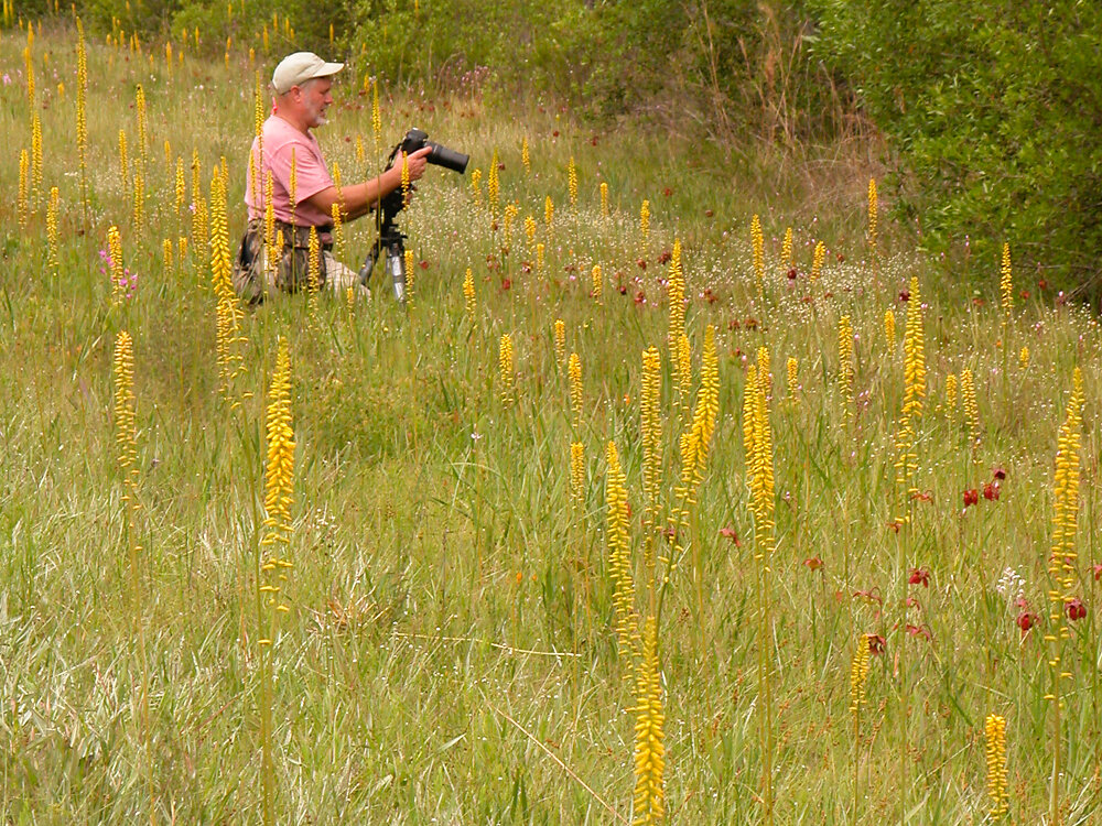 Bill Boothe photographing yellow colicroot