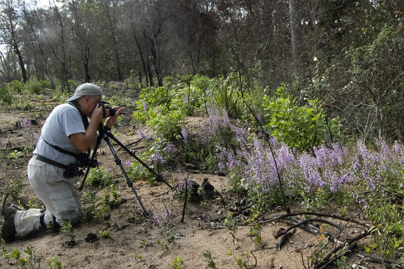 Bill Boothe photographing Gholson's Blazing Star