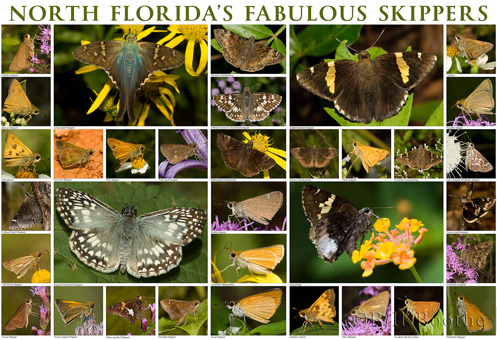 North Florida's Fabulous Skippers