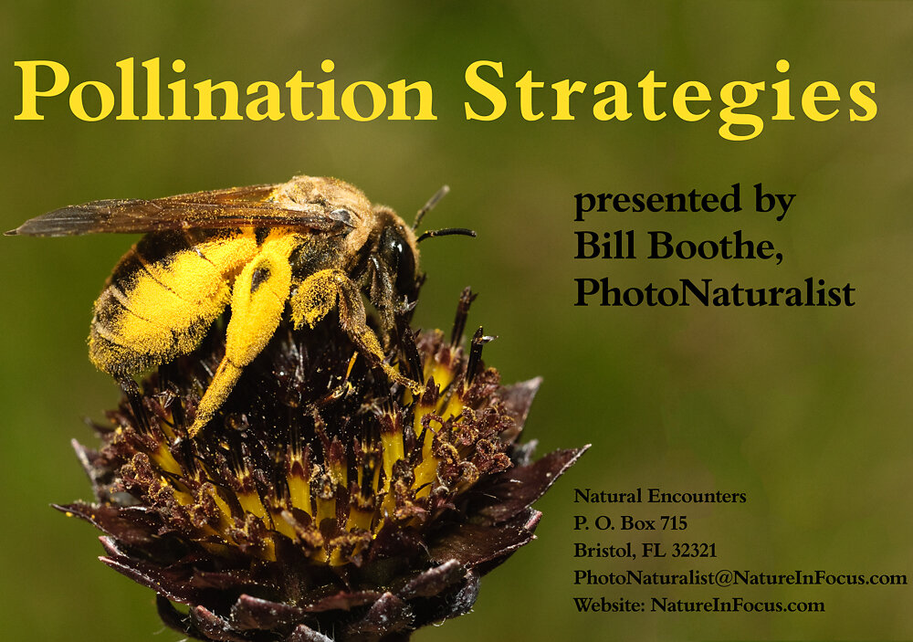 Pollination Strategies
