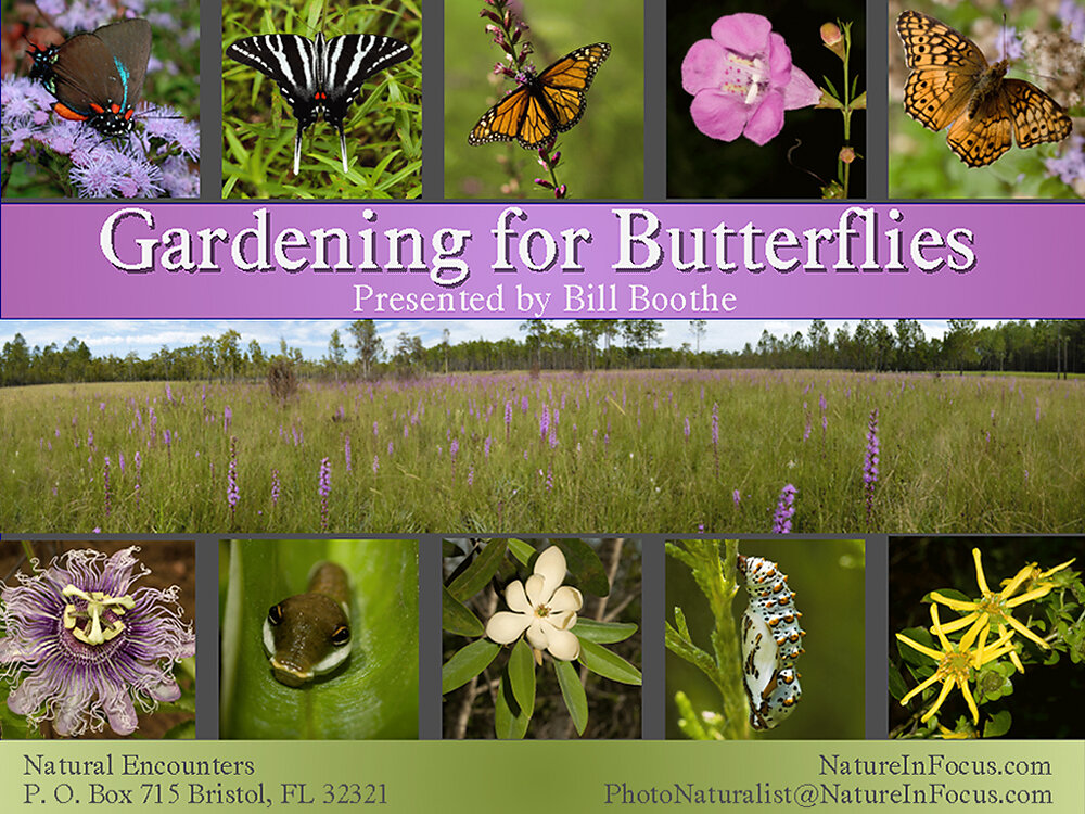 Gardening for Butterflies