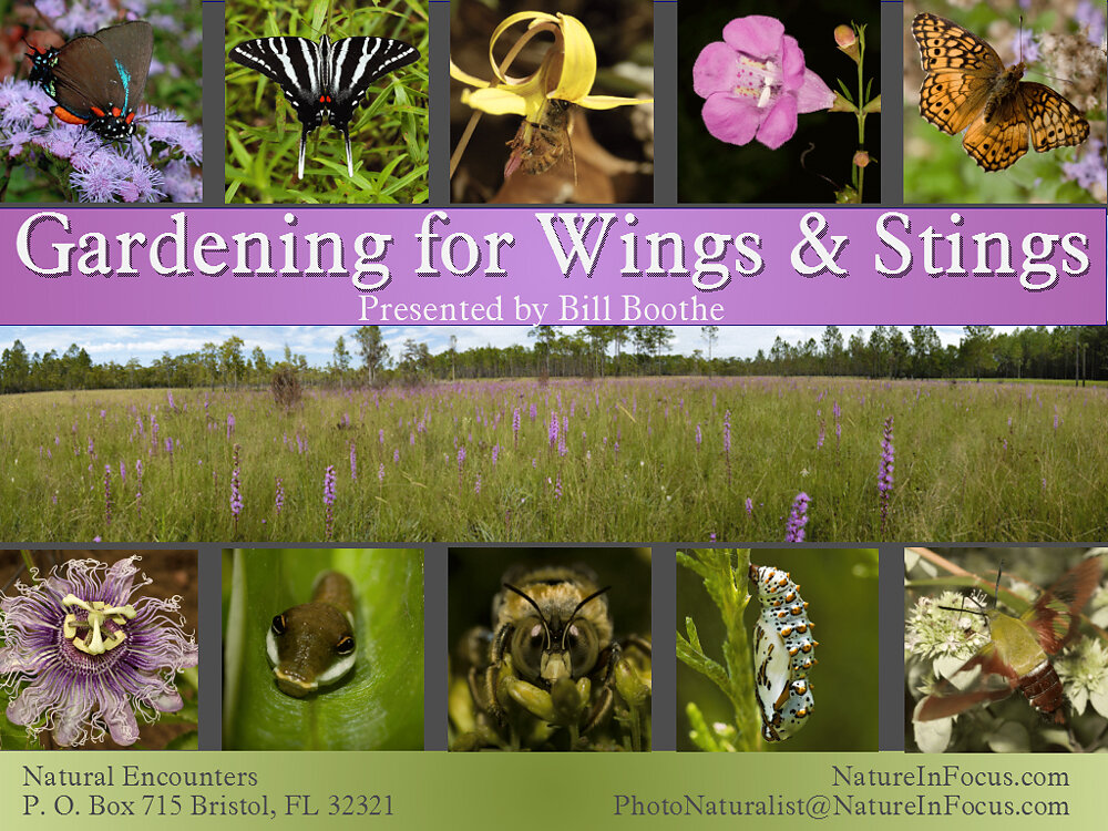 Gardening for Wings and Stings