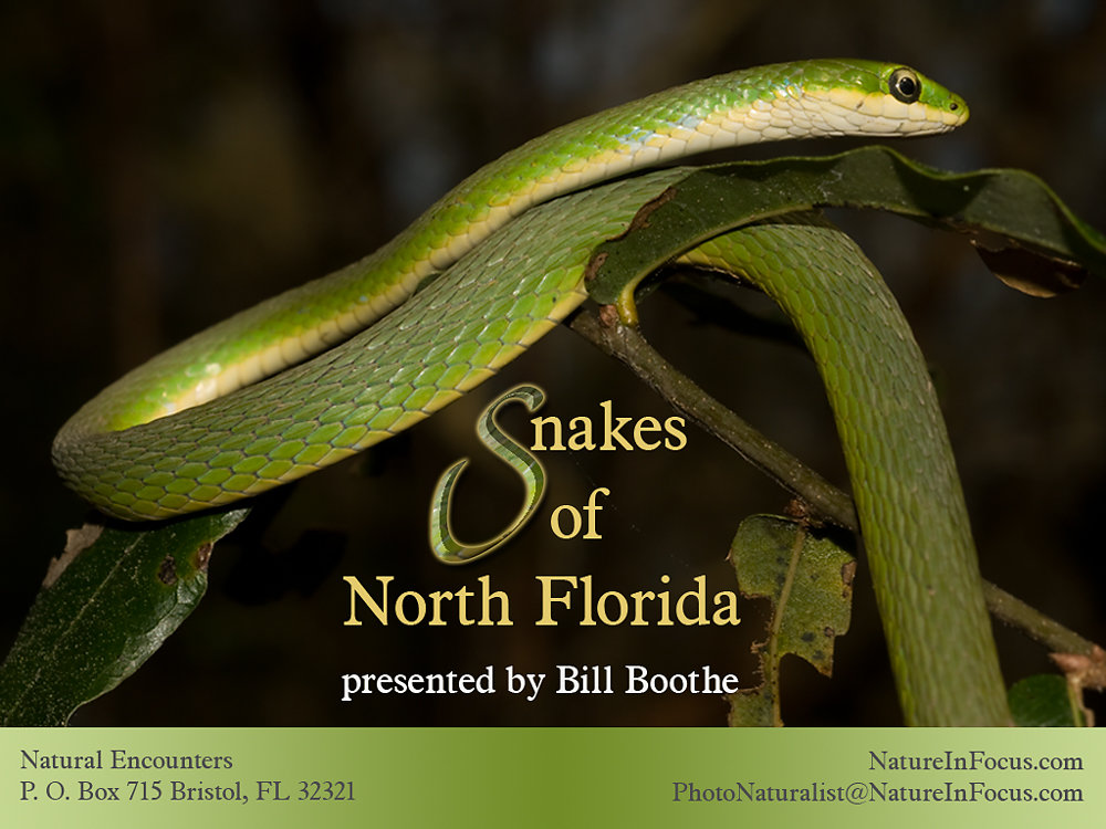 Snakes of North Florida