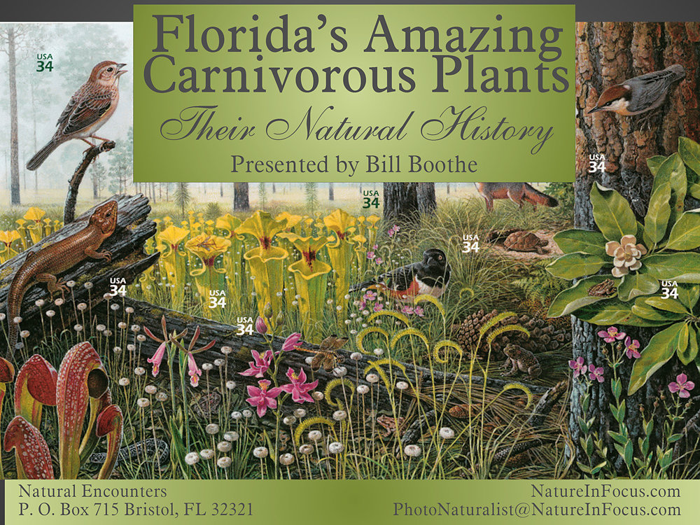 Florida's Amazing Carnivorous Plants: Their Natural History