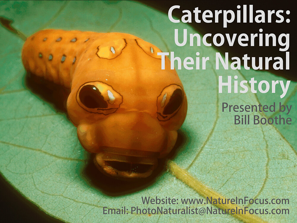 Caterpillars: Uncovering Thier natural History