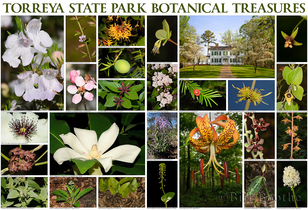 Torreya State Park Botanical Treasures