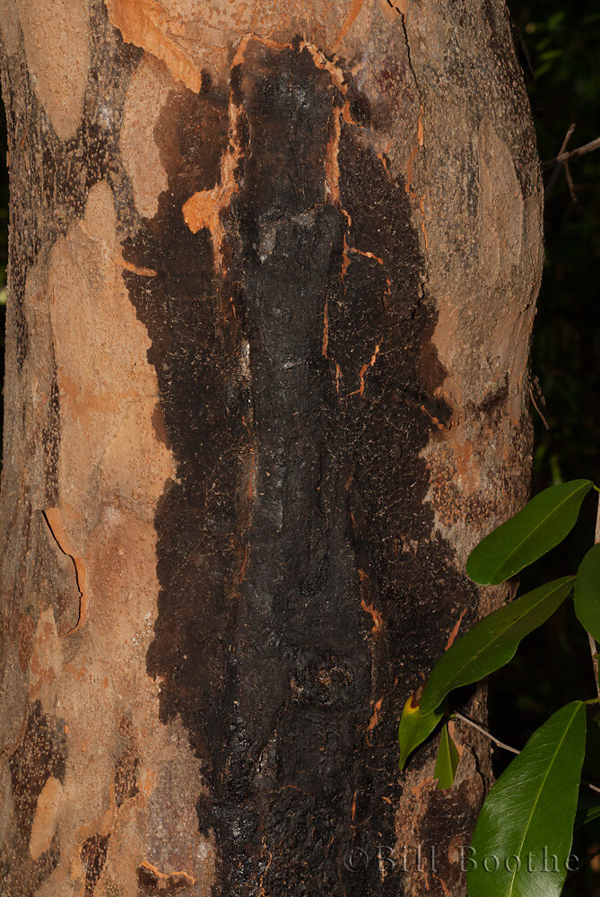 Poisonwood Bark