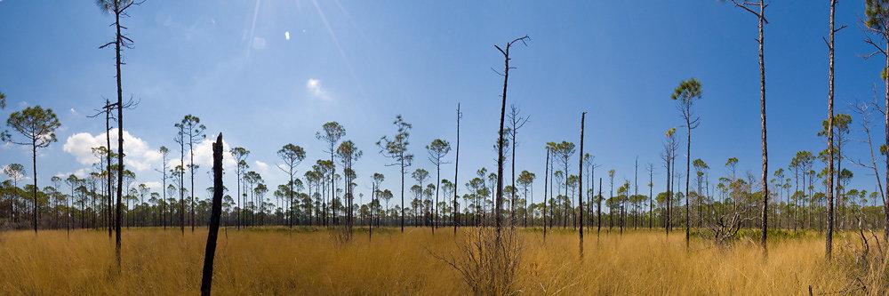 Panorama of Wiregrass